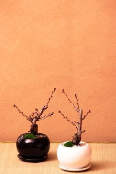 bonsai...?gifts for attendants  ?favors for wedding guests  If larger/table centerpieces...gift them to attendants or specific family members.