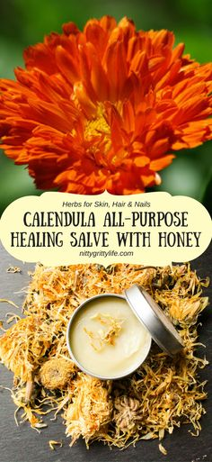 Calendula a renowned healing herb. Create an exceptional all-purpose healing salve with calendula & honey for all your cuts, scrapes and assorted boo-boos.: