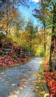 Free Image on Pixabay - Trail, Nature, Landscape, Autumn