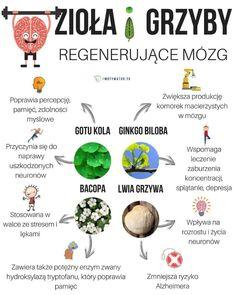 4 potężne zioła regenerujące mózg – wskazówki dla osób z alzheimerem i parkinsonem – Motywator Dietetyczny Smoothie Diet, Natural Medicine, Diet Recipes, Herbs, Healthy, Food, Young Living, Diabetes, Witch