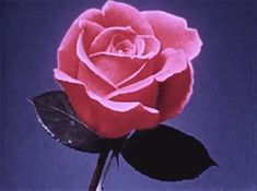 The perfect Rose Bloom ForYou Animated GIF for your conversation. Discover and Share the best GIFs on Tenor. Badass Aesthetic, Aesthetic Movies, Flower Aesthetic, Film Aesthetic, Bad Girl Aesthetic, Aesthetic Images, Aesthetic Grunge, Aesthetic Vintage, Aesthetic Anime