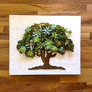 Lolivia Succulents & Gifts, Living art made on the Oregon Coast in Nehalem. (Usa / O)