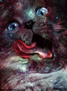 Cat universe - manipulation to merge. #cat #inspiration #breakingrocks