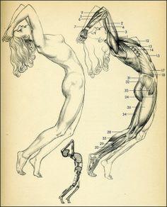 muscles-anatomy-woman-roar!