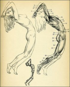 muscles-anatomy-woman-roar!