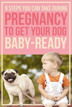 9 Steps You Can Take During Pregnancy To Get Your Dog Baby-Ready