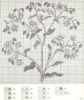 Gallery.ru / Фото #44 - Medicinal Plants - Mosca