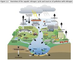 Sources of Pollution with Nitrogen