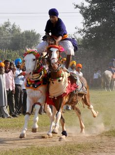 Hola Mohalla, Anandpur Sahib, Punjab. Commonwealth Games, Traditional Games, Horse Riding, Soldiers, Martial Arts, Camel, Religion, Horses, America