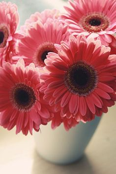 Barbeton daisy - also known as gerber daisies everywhere in the world except in South Africa - where they come from and where Barberton is.