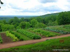 Interview with Peter Hatch about Monticello's Historic Gardens Garden S, Edible Garden, Garden Ideas, University Of Virginia, Gardening Books, Farm Gardens, Beautiful Gardens, Vineyard, Interview