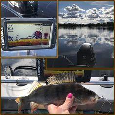Ahvenparvia bongattu | FISH ME LUCK Fish, Pisces