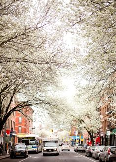 cartersville ga in the spring. beautiful I tell you.