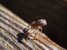 #Pinceladas de #Otoño... #Araña Carpintera