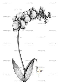 dessin original d'orchidée en vente sur: http://fr.dawanda.com/shop/Isabelle-Reina