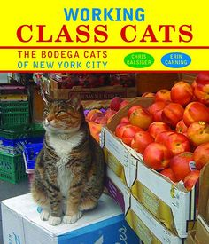 Credit: pr Working Class Cats by Chris Balsiger and Erin CanningA celebration of the cats to be found in New York Cit...