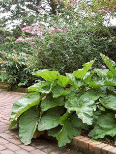 7 Perennial Vegetable Garden Plants