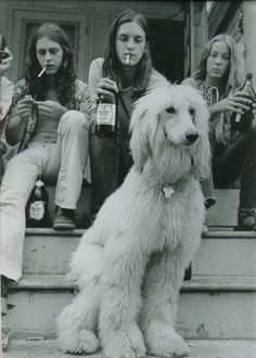 afghan hound. 1973.