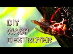 Keeping wasps away with a paper bag is probably a weird solution to the pest problem. This video shows how to get rid of wasps with a paper bag! Wasp Deterrent, Wasp Repellent, Fake Wasp Nest, Wasp Nest Removal, Get Rid Of Wasps, Wasp Traps, Life Hacks, Image Deco, Gardens