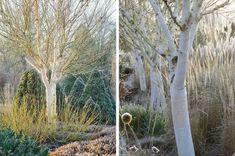 5 arbustes à bois coloré qu'il faut avoir dans son jardin d'hiver - Blog Promesse de fleurs
