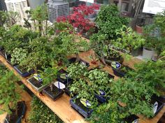 A lot of indoor bonsai trees are available . Our shop location: Weimarstr.40 The Hague NL