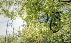 How to safely park your bike in a tree #cycling #bike #ride #exercise #explore