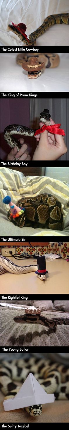 I would love a tattoo of a snake in a sun hat, the big floppy kind with a flower on it Cute Reptiles, Reptiles And Amphibians, Cute Baby Animals, Funny Animals, Snakes With Hats, Super Snake, Ball Python, Funny Cute, Hilarious