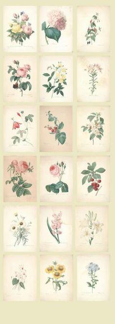 Super Cute Post Card Set - Natural Plants Flowers $5.50