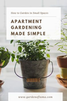 Tips to help you garden with ease in your Apartment or other small spaces. Learn how you can start a patio or balcony garden even grow indoors.
