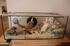 Pics of cages - hammiess Jimdo-Page! - Pics of cages – hammiess Jimdo-Page! Dwarf Hamster Cages, Cool Hamster Cages, Robo Dwarf Hamsters, Gerbil Cages, Cute Hamsters, Bunny Cages, Hamster Habitat, Hamster Care, Baby Hamster