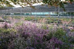 Priola Plant Nursery in Treviso, Italy. A gardener's dream