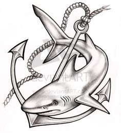 29 Best Shark Tattoo Drawings Images Shark Tattoos Tattoo