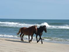 horses on the beach | United States / North Carolina / Knotts Island