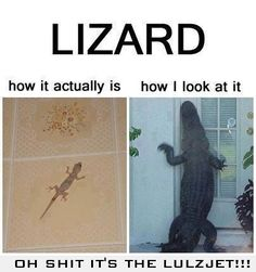 LIZARD: How I look at it vs. REALITY