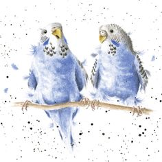Wrendale Designs Date Night Greeting Card - Set of Three Pen And Watercolor, Watercolor Animals, Watercolor Paintings, Wrendale Designs, Vintage Birds, Animal Paintings, Bird Art, Pet Birds, Painting & Drawing