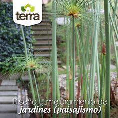 Cuéntanos cual es tu sueño de jardín y en #TerraPyJ te podemos apoyar en tu proyecto de #paisajismo.