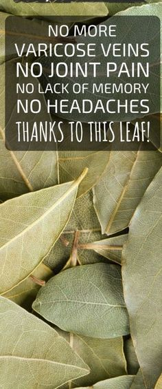 No More Varicose Veins, No Joint Pains, No Lack Of Memory, No Headaches Thanks To This Leaf