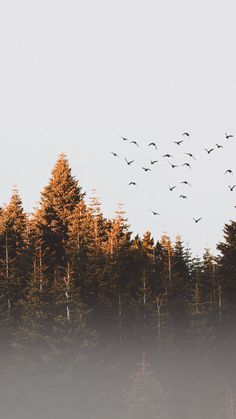 Trees, nature, dawn, sunrise, birds, 720x1280 wallpaper