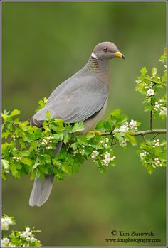 N Animals, Cute Animals, Dove Pigeon, Mourning Dove, Birds And The Bees, Beautiful Birds, Beautiful Things, Colorful Birds, Friends