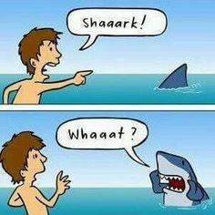 In honor of Shark Week Shark Week Funny, Shark Jokes, Shark Week Memes, Funny Sharks, Shark Humor, Animal Jokes, Funny Animal Memes, Funny Jokes, Funny Shark Pictures