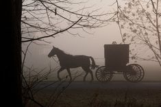Filed under History 18th century coach horse carriage