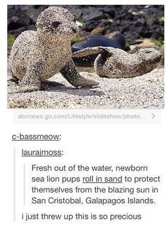 EN Fresh out of the water, newborn sea lion pups roll in sand to protect themselves from the blazing sun in San Cristobal, Galapagos Islands. i just threw up this is so precious - iFunny :) Animals And Pets, Baby Animals, Cute Animals, Neko, Cat Memes, Funny Memes, Galapagos Islands, Funny Tumblr Posts, Wholesome Memes
