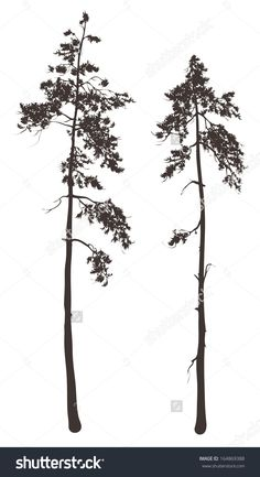 stock-vector-silhouettes-of-two-tall-pine-trees-on-a-white-background-vector-illustration-164869388.jpg (871×1600)