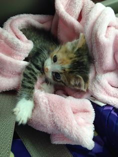 Baby pic of my kitten