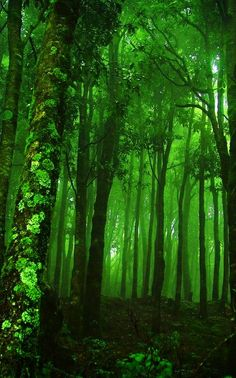 The mystery of a dark green forest with dappled sunlight falling through the leaves #houseoffraser