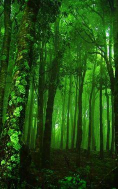 .a dark green forest
