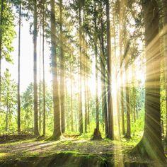 Dein idyllischer Urlaub im Grünen in den Niederlanden | Urlaubsheld.de