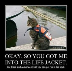 That Life Jacket was Expensive! - LOLcats is the best place to find and submit funny cat memes and other silly cat materials to share with the world. We find the funny cats that make you LOL so that you don't have to. Funny Animal Pictures, Cute Funny Animals, Funny Cute, Cute Cats, Hilarious, Animal Pics, Funny Pics, Silly Cats, Cats And Kittens