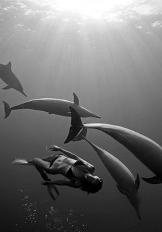 Dolphins . Swimming . Incredible