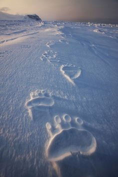 Polar Bear Tracks, Svalbard, Norway by nancy via bluepueblo.tumblr.com